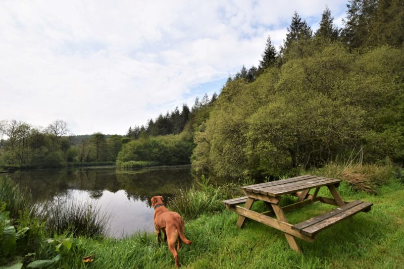 Take the dogs for a walk around the onsite lakes